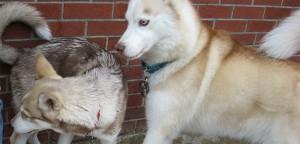 Posturing Dogs