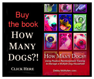 Buy the book, How Many Dogs?! click here
