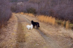 Even during the busy holiday season Bing and Tango take long walks everyday.