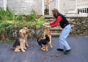 leadership used correctly in training multiple dogs