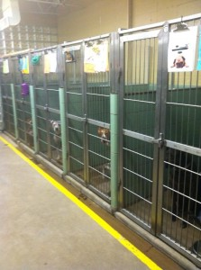 Picture of dogs inside a shelter