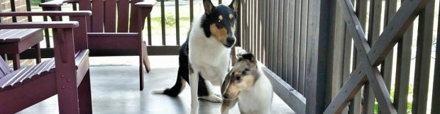 From the Frying Pan to the Fire: Adding a Dog When Your Current Dog Has Issues