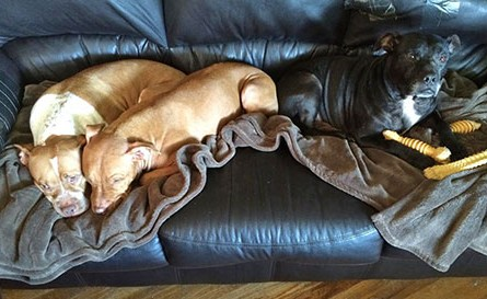 This is what dogs who feel safe look like while relaxing.