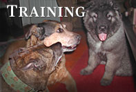 Image: Non-Force Positive Reinforcement Training Methods for the Multiple Dog Household.